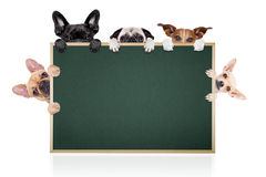 stock image of  row of dogs placard