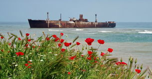 stock image of  seascape with red poppies on the black sea. landmark attraction in costinesti, romania: evangelia shipwreck