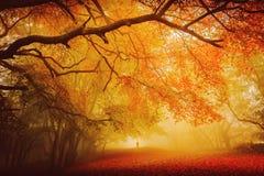 stock image of  seasonal forest fall walk
