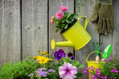stock image of  seedlings of garden plants and flowers in flowerpots. garden equipment: watering can, buckets, shovel, rake, gloves.