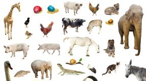 stock image of  set of farm wild and domestic animals