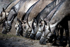 stock image of  several horses eating dry grass