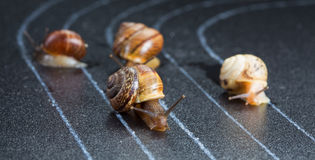 stock image of  snails on the athletic track
