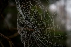 stock image of  spiderweb in closeup, can see water drops