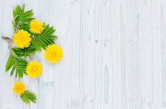 stock image of  spring background. yellow dandelion flowers and green leaves on light blue wooden board with copy space, top view.