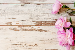 stock image of  stunning pink peonies on white light rustic wooden background. copy space, floral frame. vintage, haze looking.
