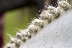 stock image of  styled horse mane