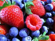 stock image of  summer berries