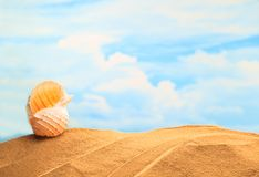 stock image of  summertime seasonal, white yellow seashell on the sandy beach with sunny colorful blue sky background and copy space.