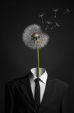 stock image of  surrealism and business topic: dandelion flower head instead of a man in a black suit on a dark background in the studio