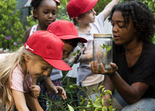 stock image of  teacher and kids school learning ecology gardening