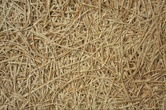 stock image of  texture