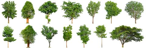 stock image of  tree collection isolated on white background 14 trees.