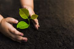stock image of  trees with money, saving money and growing hands.growth of money and environmental protection tree care