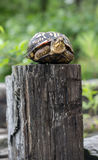 stock image of  turtle on a fence post