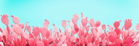 stock image of  unusual blue cactus field on pink background