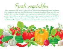 stock image of  veget boadr