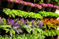 stock image of  vertical garden