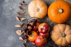stock image of  vibrant orange color pumpkin ripe organic red glossy apples pomegranates chestnuts persimmons dry autumn on grey stone background.