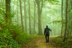 stock image of  walking in forest
