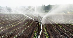stock image of  watering crops in western germany with irrigation system using sprinklers in a cultivated field.