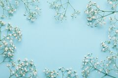 stock image of  wedding flower frame on blue background from above. beautiful floral pattern. flat lay style.