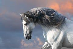 stock image of  white horse with long mane