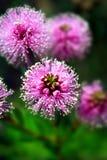 stock image of  wild flowers