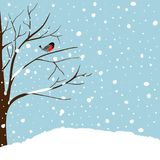 stock image of  winter landscape scene. christmas new year greeting card. forest falling snow red capped robin bird sitting on tree. blue sky