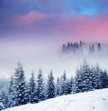 stock image of  winter