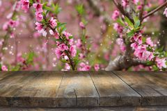 stock image of  wooden table in front of spring blossom tree landscape. product display and presentation.