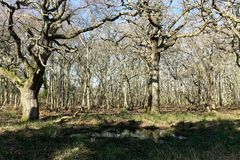 stock image of  the woods at arne