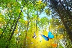 stock image of  woods sunshine