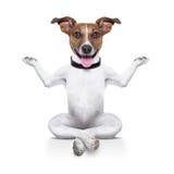 stock image of  yoga dog