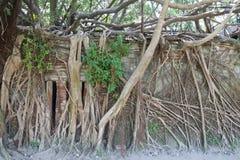 Taïwan : Cabane dans un arbre d'Anping Photos stock