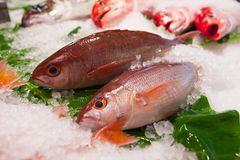 Taïwan Taïpeh, poissonnerie guidée, sur les produits aquatiques, attractions touristiques, magasins de fruits de mer, restaurants image stock