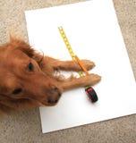 taśmy używać psia miara fotografia royalty free