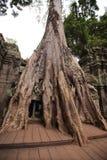 Ta的Prohm,吴哥窟,暹粒,柬埔寨密林 图库摄影