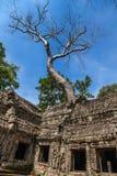 Ta świątynia Prohm Zdjęcie Stock