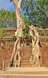 Ta świątynia Prohm Obraz Stock