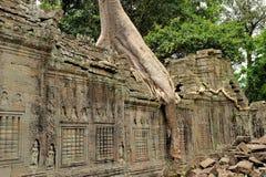 Ta świątynia Prohm Zdjęcia Royalty Free