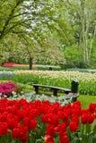 Ta av planet i trädgårds- Keukenhof Fotografering för Bildbyråer