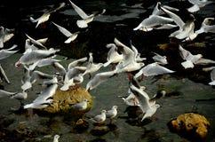 Ta av seagulls från den steniga kusten Arkivbilder