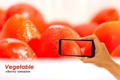 Ta bilden med mobilen på nya körsbärsröda tomater Fotografering för Bildbyråer