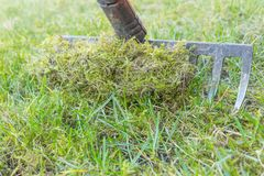 Ta bort gammal mossa och dött gräs från gräsmattan arkivfoto