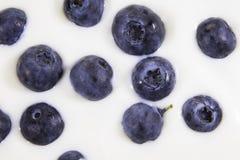 tła czarnej jagody karmowy zdrowy organicznie Pojęcie: Zdrowy utrzymanie, świezi odżywiania, sprawności fizycznej dieta Fotografia Royalty Free