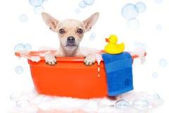 ta för badhund Royaltyfri Foto