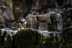 ta för fågelflyg Royaltyfria Bilder