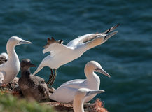 Ta för havssula av Arkivfoton