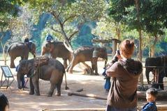 Ta fotoet av elefanter royaltyfria foton